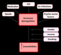 Figure 5. Pathways to increased comorbidities in women through hormone dysregulation and other factors.